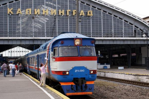 Услуга перевозки животных от РЖД появится в 226 поездах
