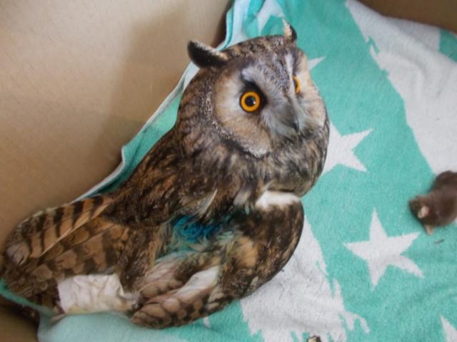 Центр реабилитации диких птиц откроется в Перми