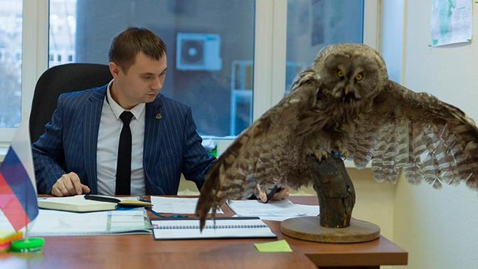 Чучело краснокнижной совы нашли в кабинете чиновника Минэкологии