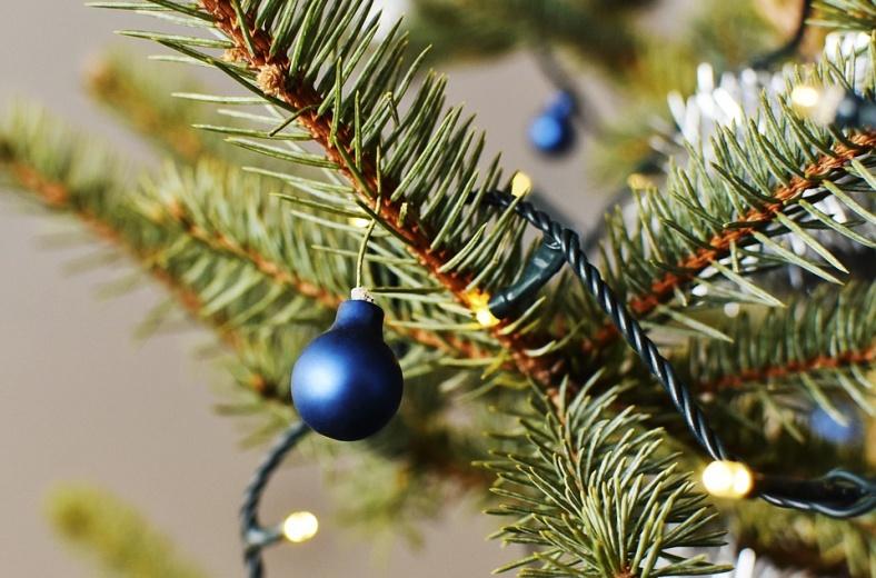 В Воронеже можно обменять новогоднюю елку на экосувенир
