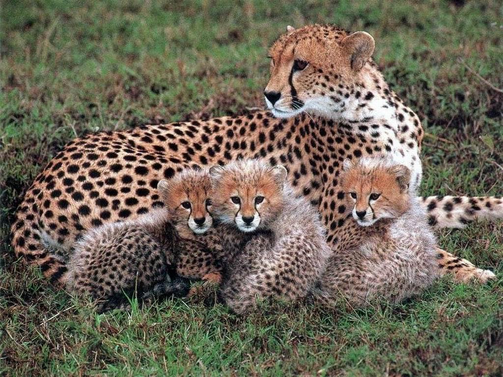 Наказание за охоту на краснокнижных животных могут ужесточить