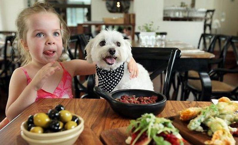 В России задумались о лояльности к любителям ходить в кафе с собаками