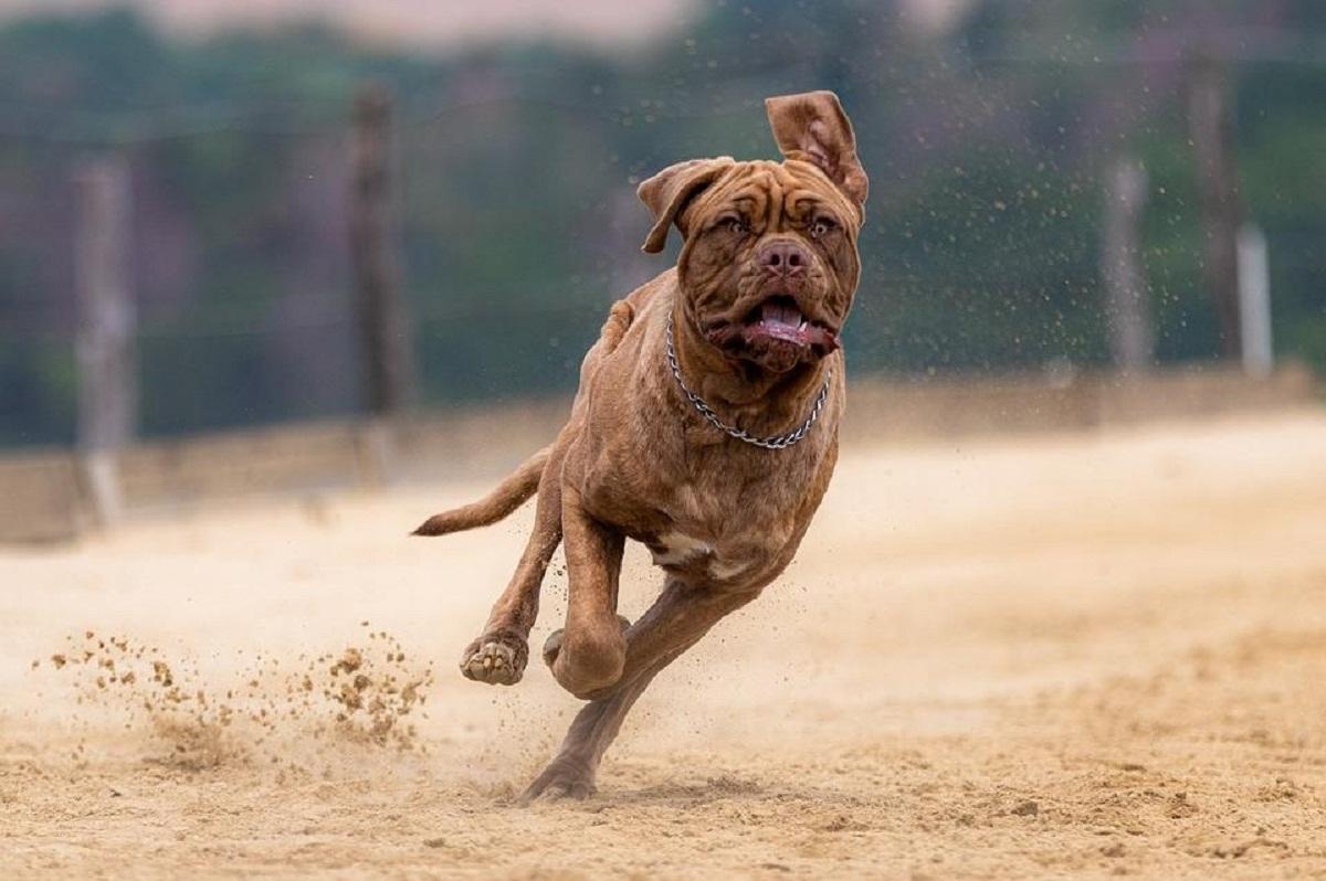 Связанные с выгулом собак законы могут доработать