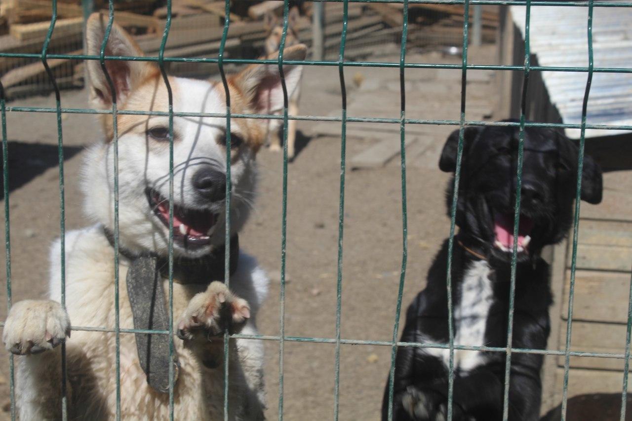 Живодёрские сайты могут начать блокировать ещё до суда