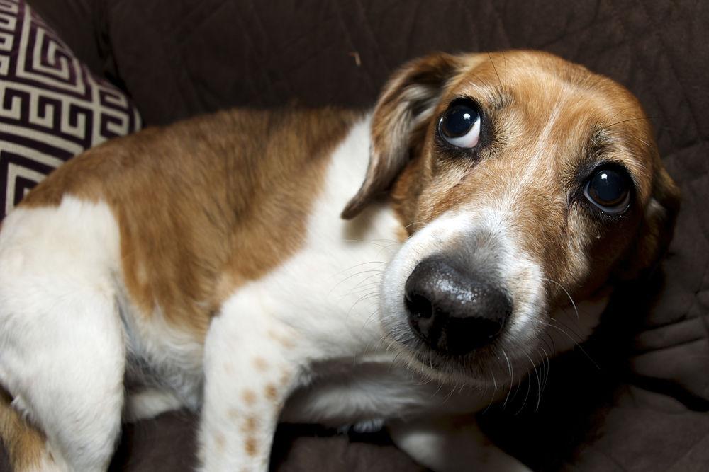 Животные санкции: стали известны штрафы для собачников