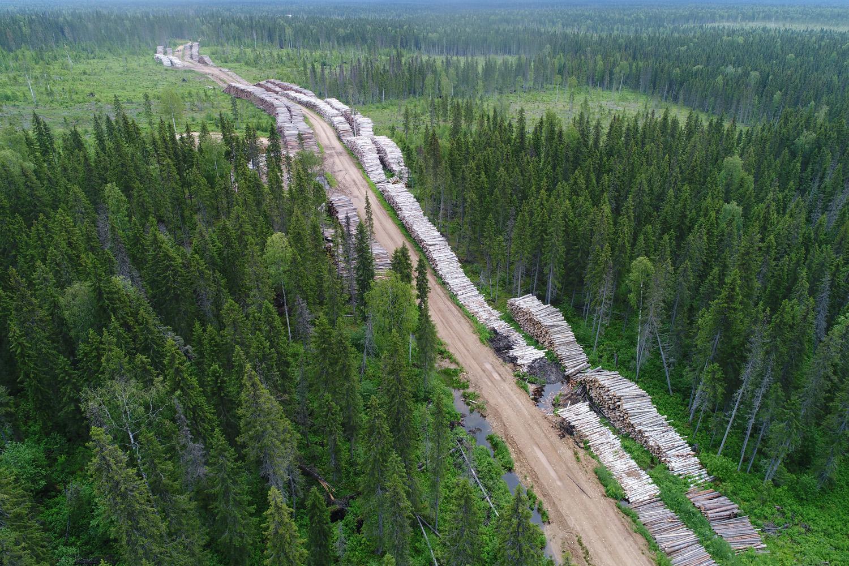 Гринпис сообщил о вырубке леса в особо охраняемой зоне под Архангельском