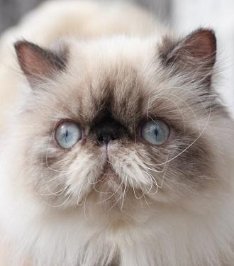 Жизнь котов «Аэрофлот» оценит по цене багажа: 1800 рублей/кг