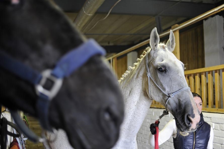 В Петербурге спасённые от уличного проката и бойни лошади стали терапевтами