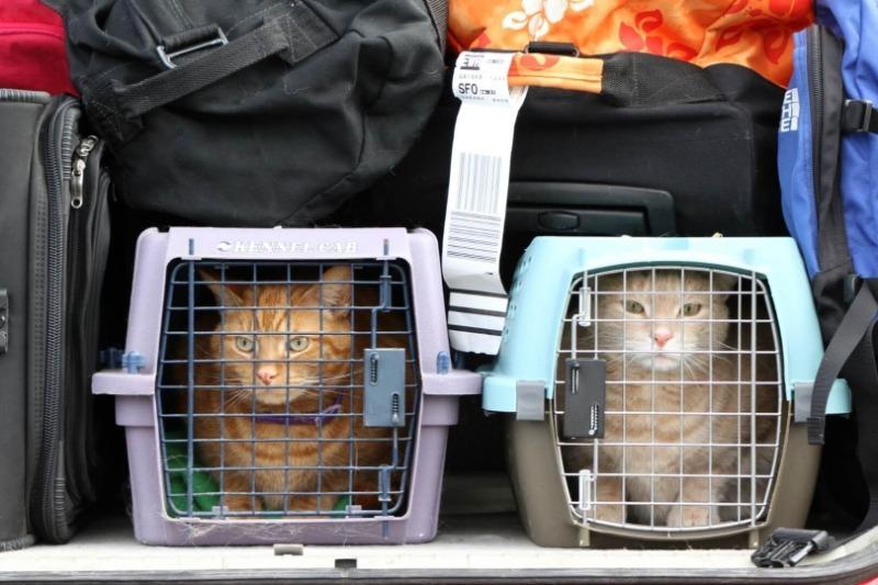 «Аэрофлот» поднял цены на перевоз животных