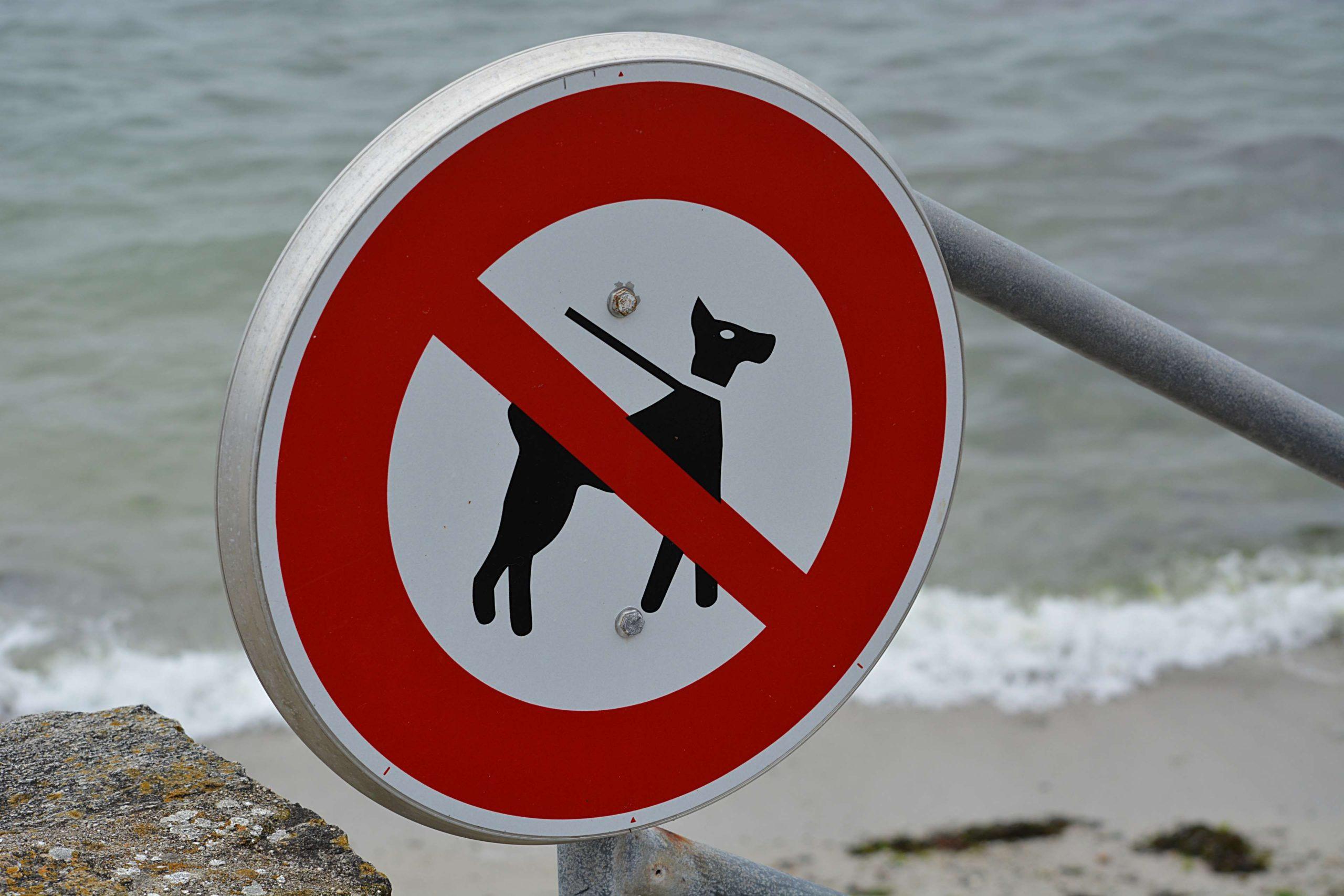 На пляжи запретят вход с животными за исключением собак-поводырей