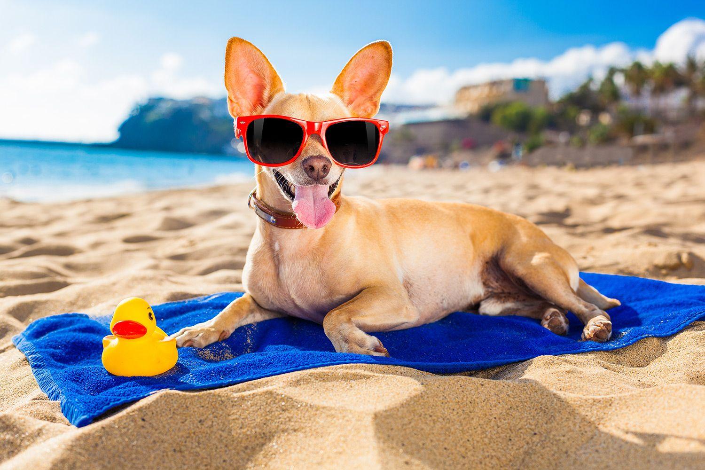 В Госдуме предложили отвести на пляжах зоны для отдыха с питомцами