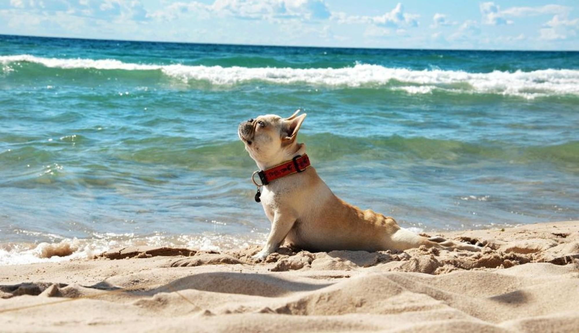 В России рассматривают возможность оборудования пляжей для отдыха с животными