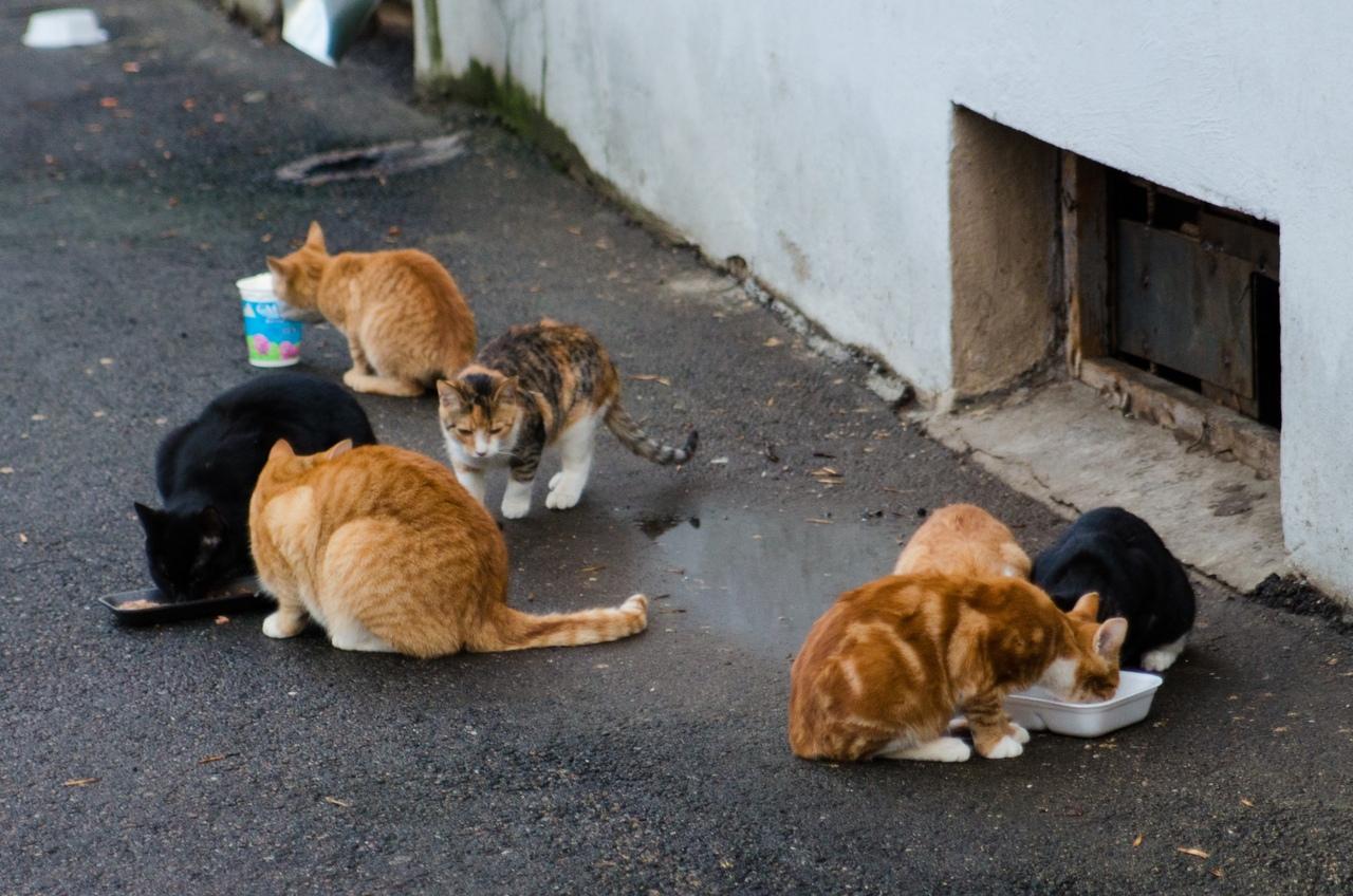 Фонд защиты городских животных оказывает помощь в стерилизации кошек